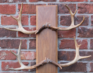Diy Antler Mount Our Southern Rootsour Southern Roots