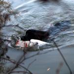 Duck Blind01