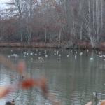 Duck Blind02