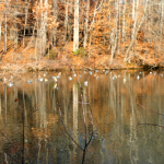 Duck Blind12