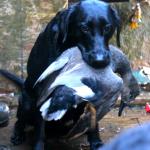 Duck Blind15