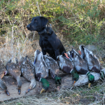 Duck Hole Hunting 10