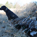 Duck Hole Hunting 12