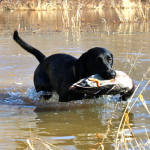 Duck Hole Hunting 7