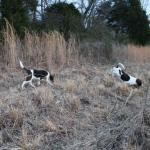 Starting Pups15